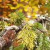 Jesień w Małych Pieninach / Autumn in the Small Pieniny mountains fot. P. Kubik